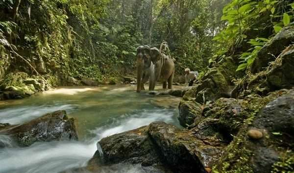 phuket-national-park-with-elephants-waterfalls-and-international-teachers