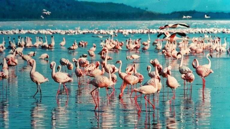 lake nakuru in kenya if you teach english
